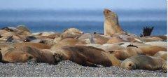 Convocatoria para la creación del Area Natural Protegida, Rocas Coloradas